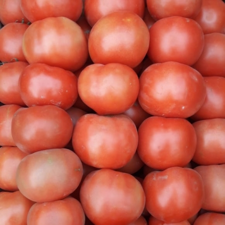 Tomate Mediano x kg