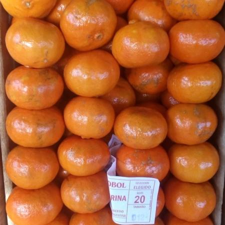 Mandarina criolla grande  x 2 kg