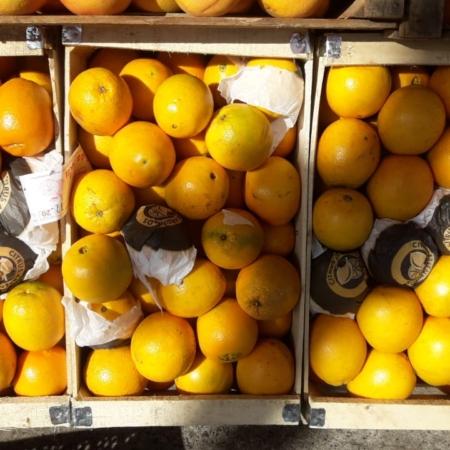 Naranja de Ombligo CHICA x Kg