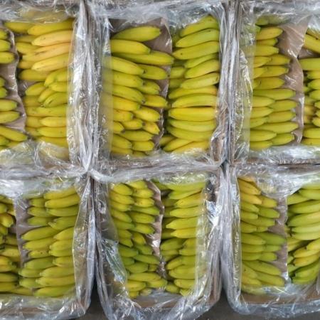 Banana Superior Ecuador  x kg