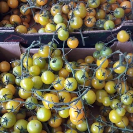 tomate cherry amarillo en RAMA x kg