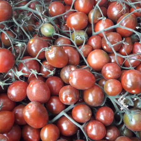 tomate cherry morado en RAMA x kg