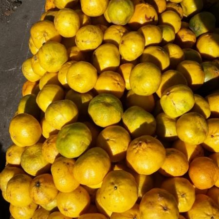 Mandarina Criolla OFERTA x kg