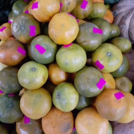 Mandarina Dancy AGROECOLÓGICA x kg