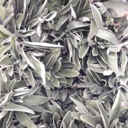 Aromática Salvia x ATADO