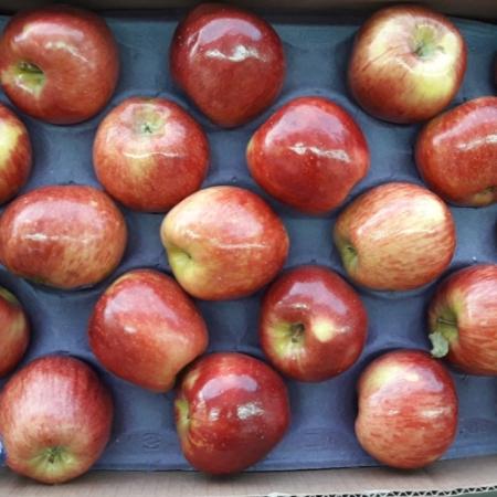 Manzana red GLOBAL x kg