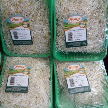 Brotes de alfalfa x bandeja