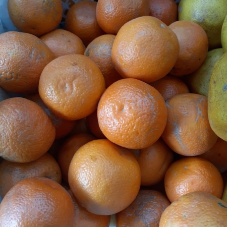 Naranja de jugo ORGÁNICA  x kg